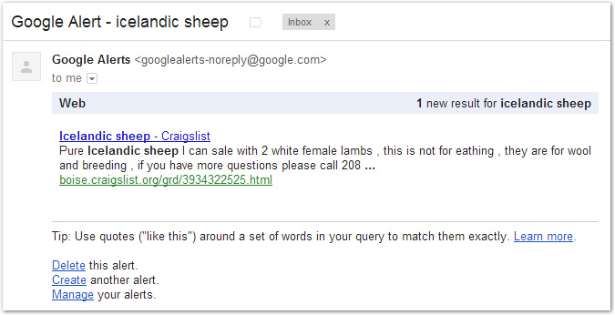 google-alert-icelandic-sheep