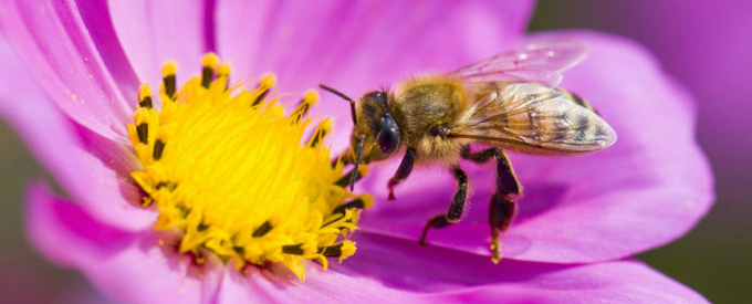top 9 plants for attracting bees